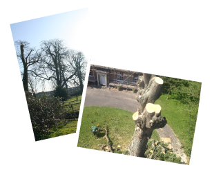 tree work in wiltshire